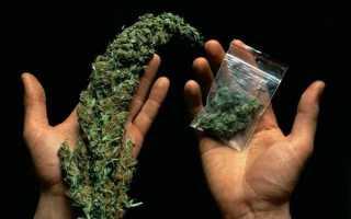 Сколько держится трава в крови и моче для анализа у нарколога? таблица вывода марихуаны из организма человека
