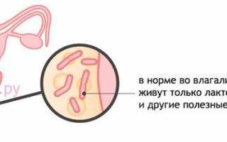 Большое количество эритроцитов в цитологическом мазке