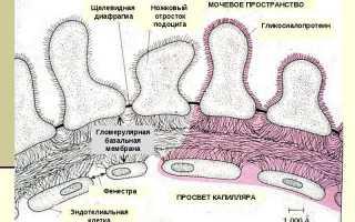 16 основных причин появления эритроцитов в моче у ребёнка
