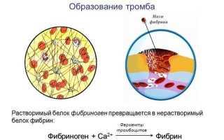 Как сдается анализ крови — натощак или нет?