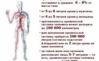 Сколько литров крови в человеке?