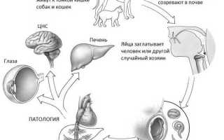 Антитела суммарные к антигенам токсокар igg, титры, иммуноглобулин
