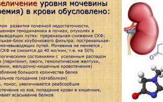 Уровень мочевины, мочевой кислоты и аммиака в крови