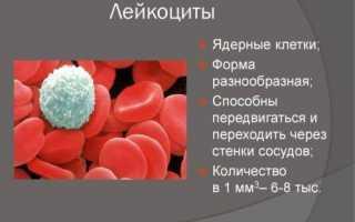 Лейкоциты в крови понижены