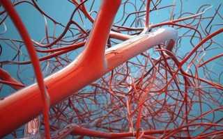 Сколько литров крови в человеческом организме