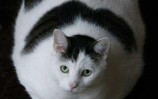 Глюкоза в моче у кота ростов