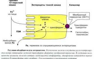 Ферритин — расшифровка анализа
