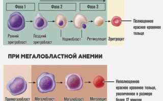 Норма ретикулоцитов в крови для ребенка