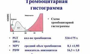 Mpv в анализе крови