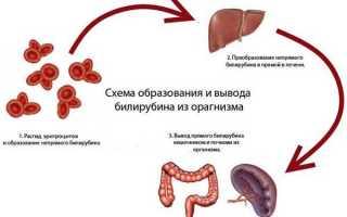 Общий билирубин сыворотки крови норма