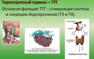 5 правил сдачи крови на анализ гормонов щитовидной железы