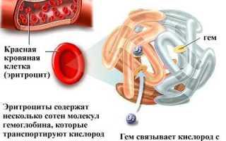 Гемоглобин в крови: норма содержания и причины отклонений