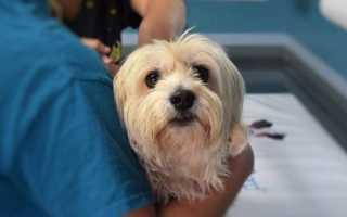 Рентген для домашних животных в ветеринарной клинике