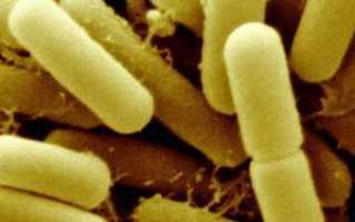 Лактобациллы в мазке что это