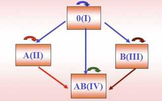Как узнать свою группу крови? анализ на группу крови: где сделать
