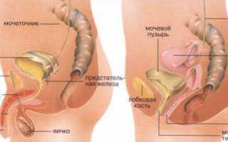 Анализы и обследования при раке мочевого пузыря